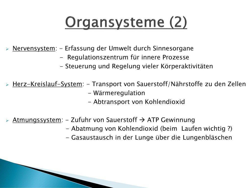 Organsysteme (2) Nervensystem: - Erfassung der Umwelt durch Sinnesorgane. - Regulationszentrum für innere Prozesse.