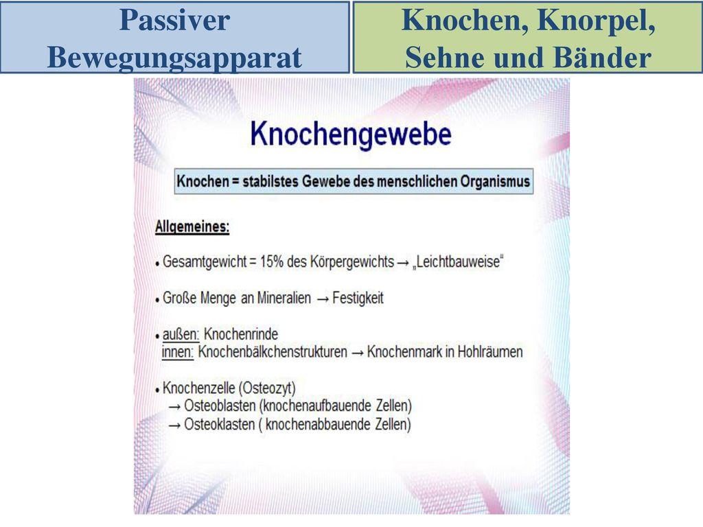 Fein Knochenrinde Galerie - Menschliche Anatomie Bilder ...