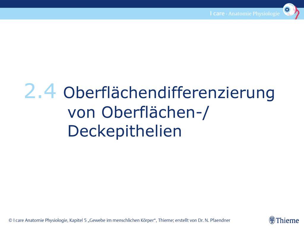 Wunderbar Anatomie Und Physiologie Kapitel 2 Ideen - Menschliche ...