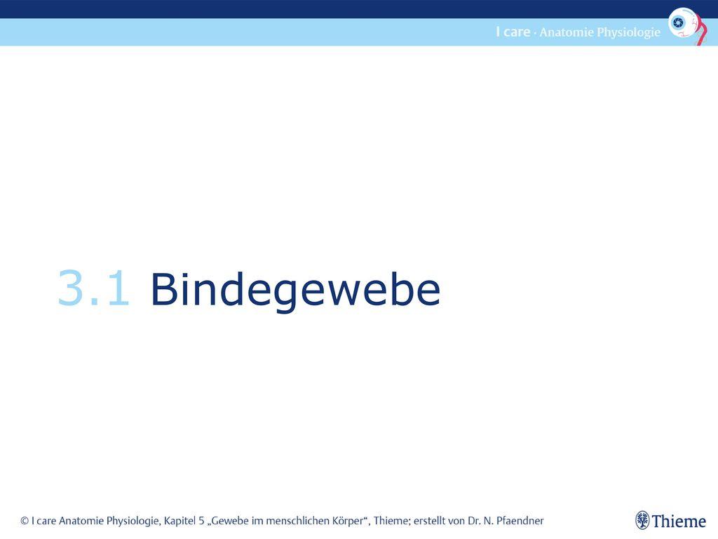3.1 Bindegewebe