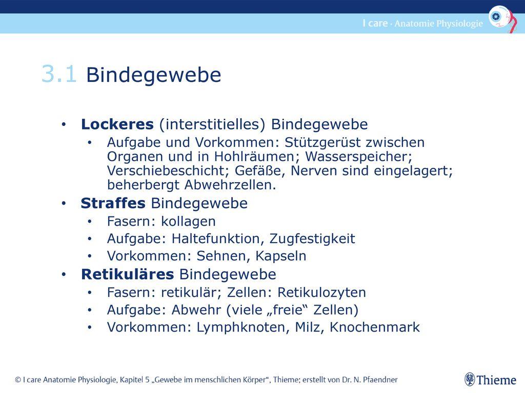 3.1 Bindegewebe Lockeres (interstitielles) Bindegewebe