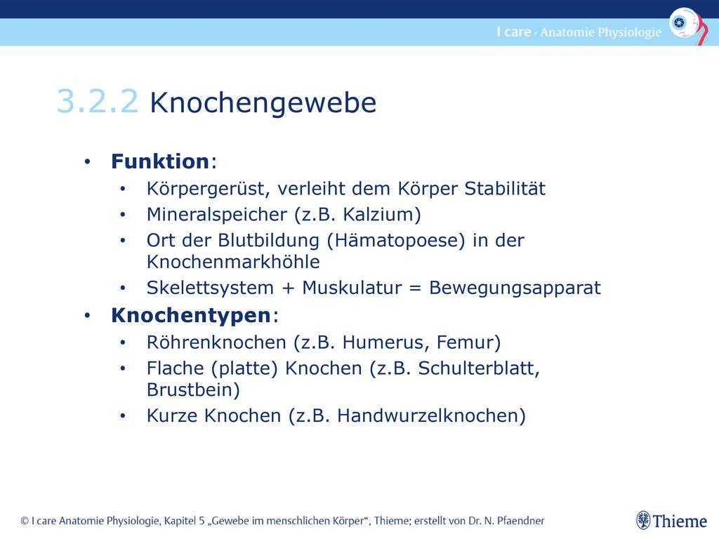 3.2.2 Knochengewebe Funktion: Knochentypen: