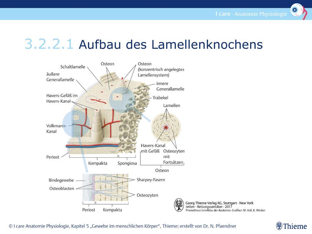 3.2.2.1 Aufbau des Lamellenknochens