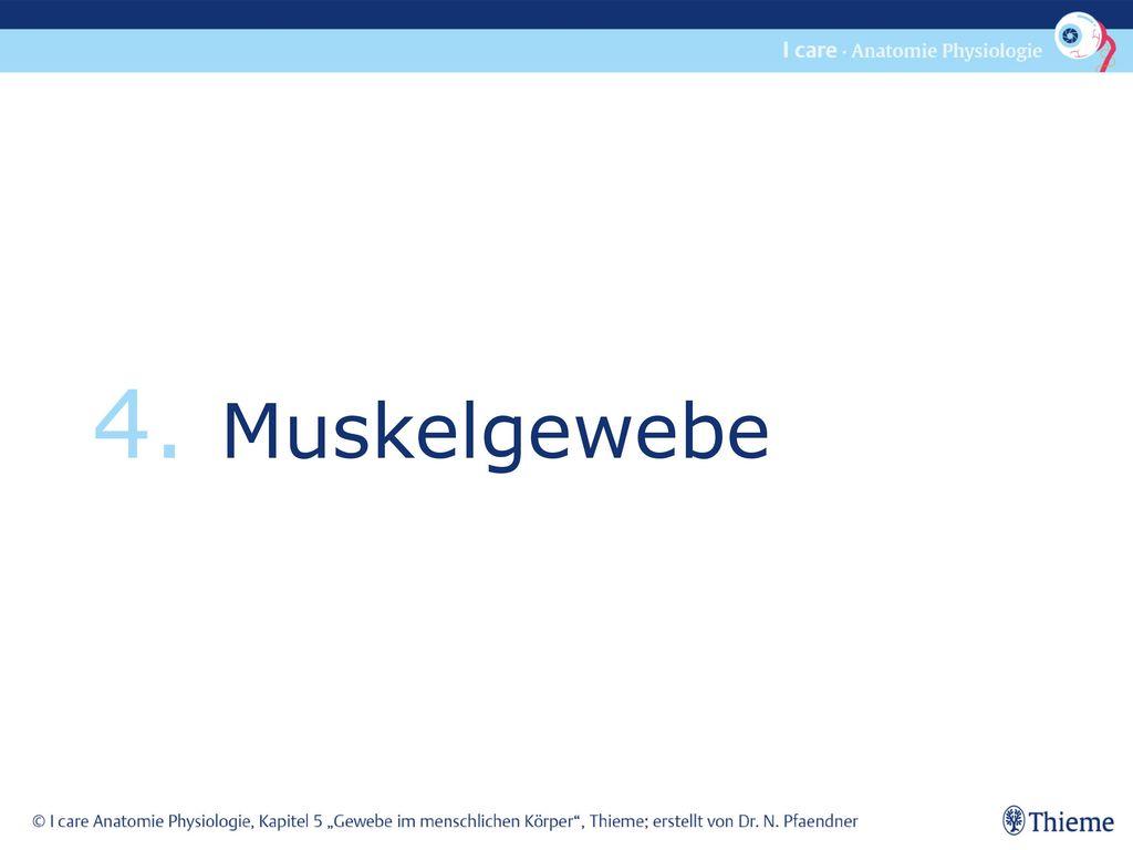 4. Muskelgewebe