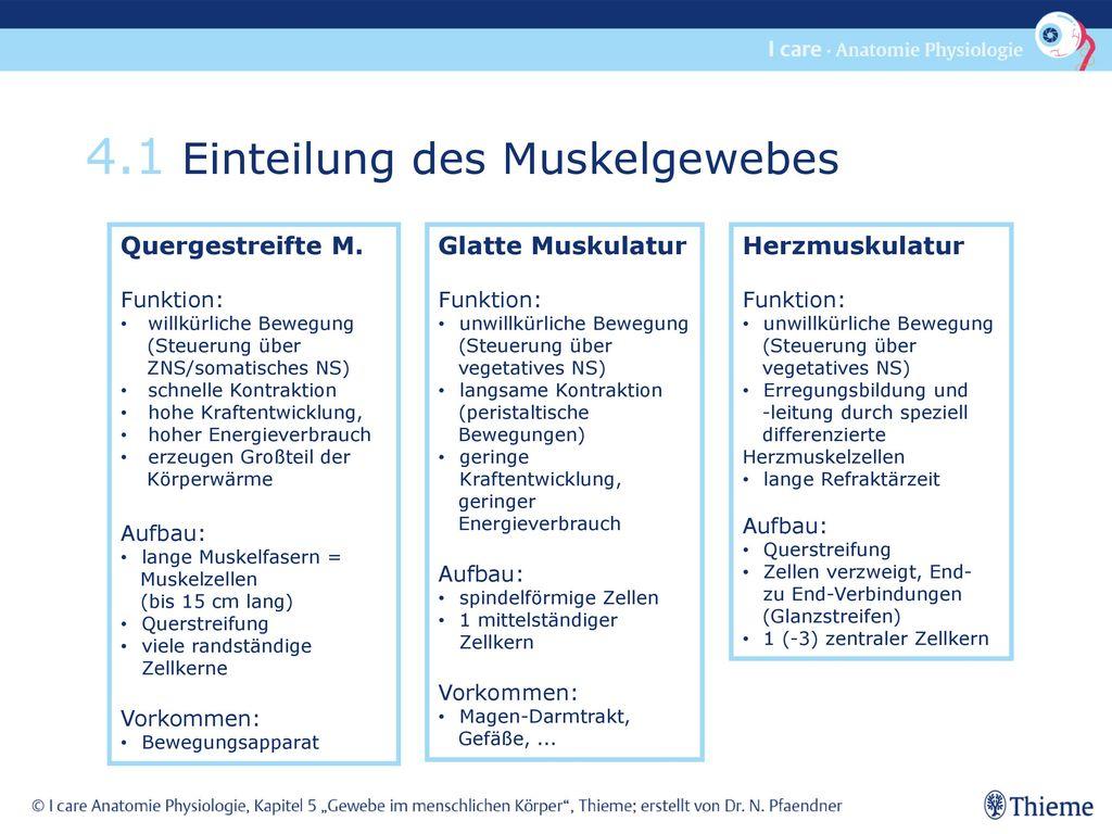 4.1 Einteilung des Muskelgewebes