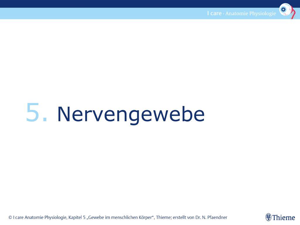 5. Nervengewebe