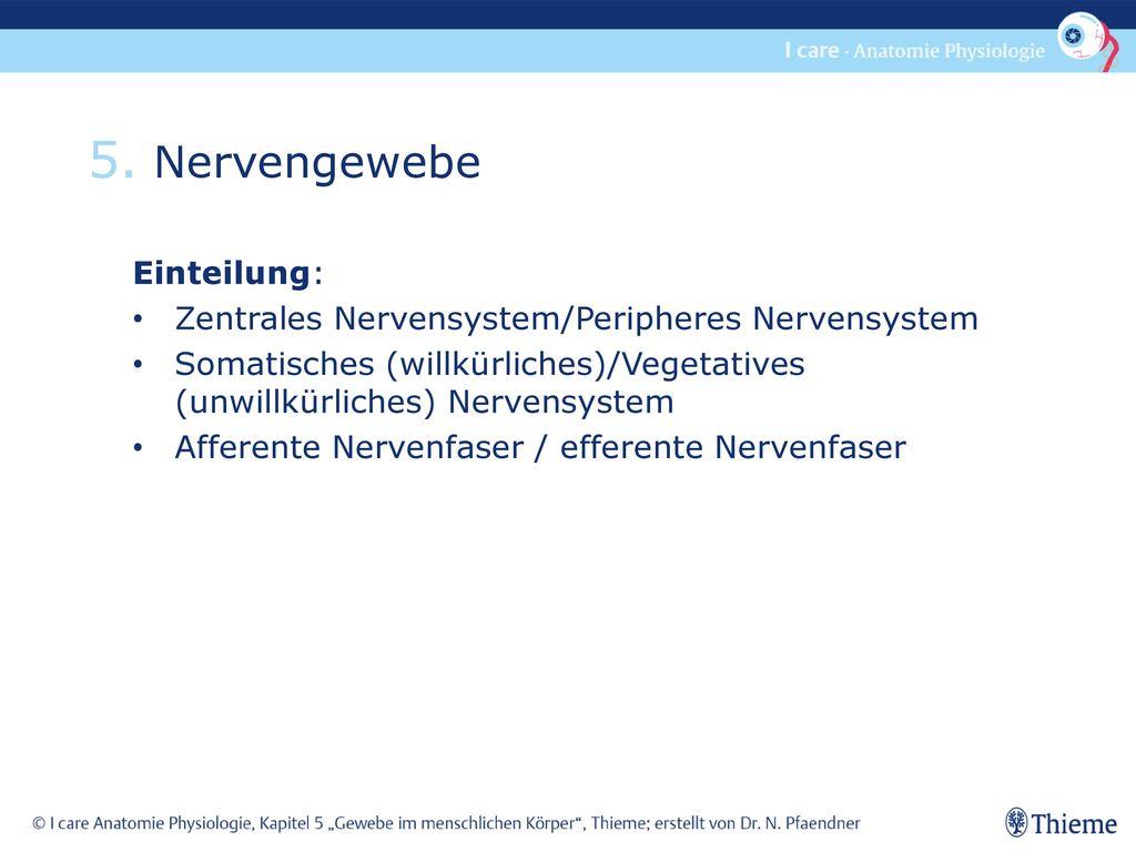 5. Nervengewebe Einteilung: