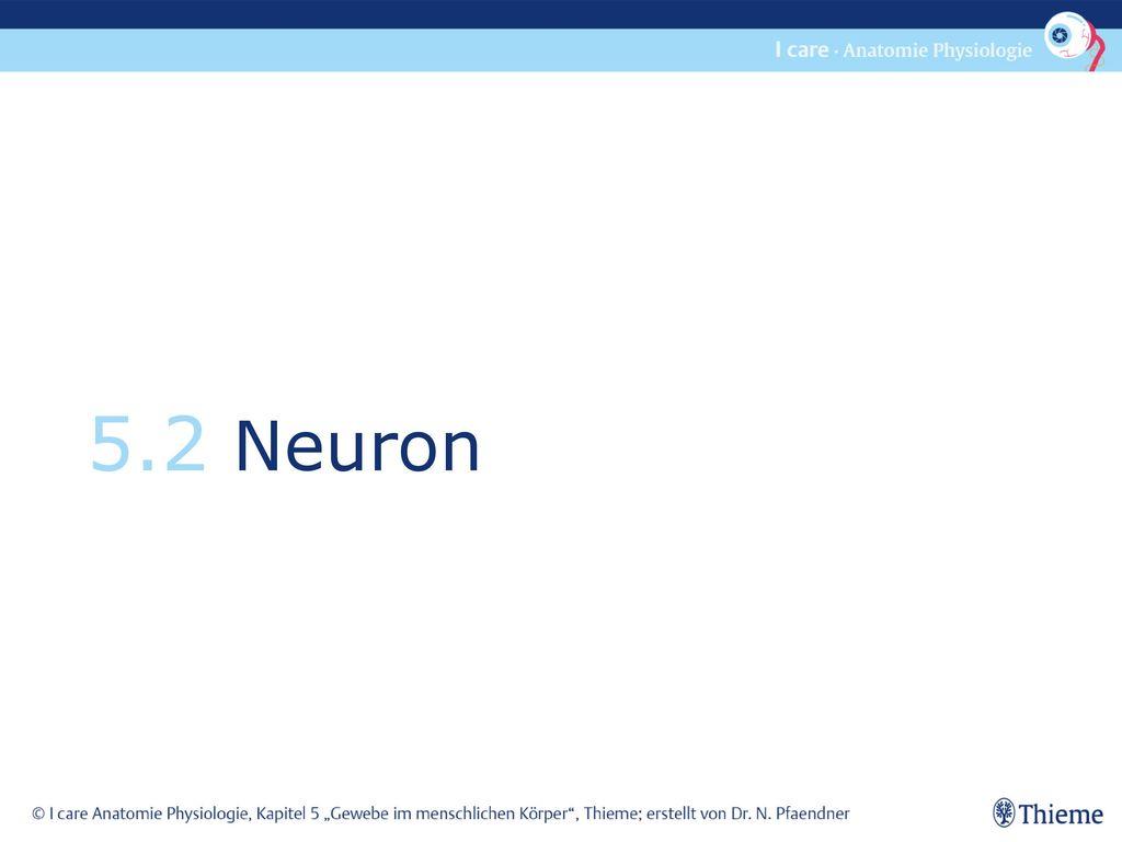 5.2 Neuron