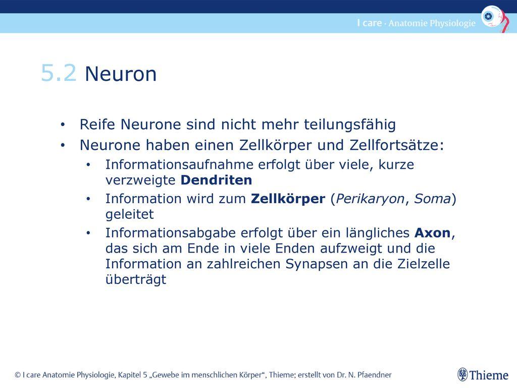 5.2 Neuron Reife Neurone sind nicht mehr teilungsfähig