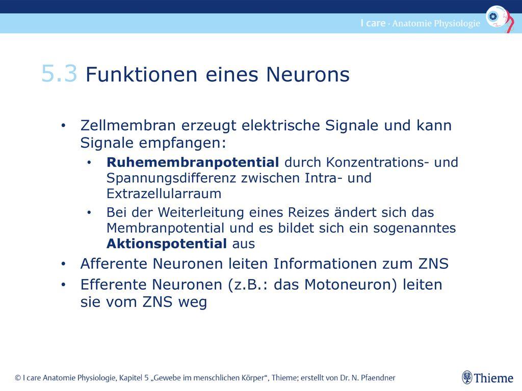 5.3 Funktionen eines Neurons
