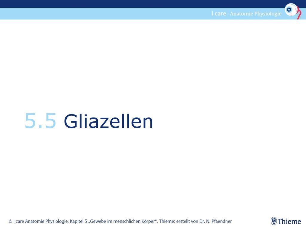 5.5 Gliazellen