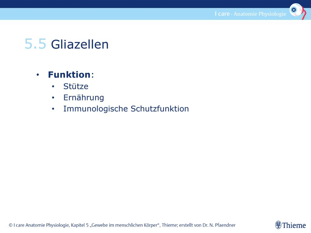 5.5 Gliazellen Funktion: Stütze Ernährung