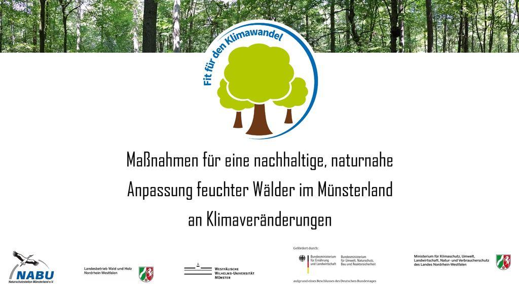 Maßnahmen für eine nachhaltige, naturnahe Anpassung feuchter Wälder im Münsterland an Klimaveränderungen