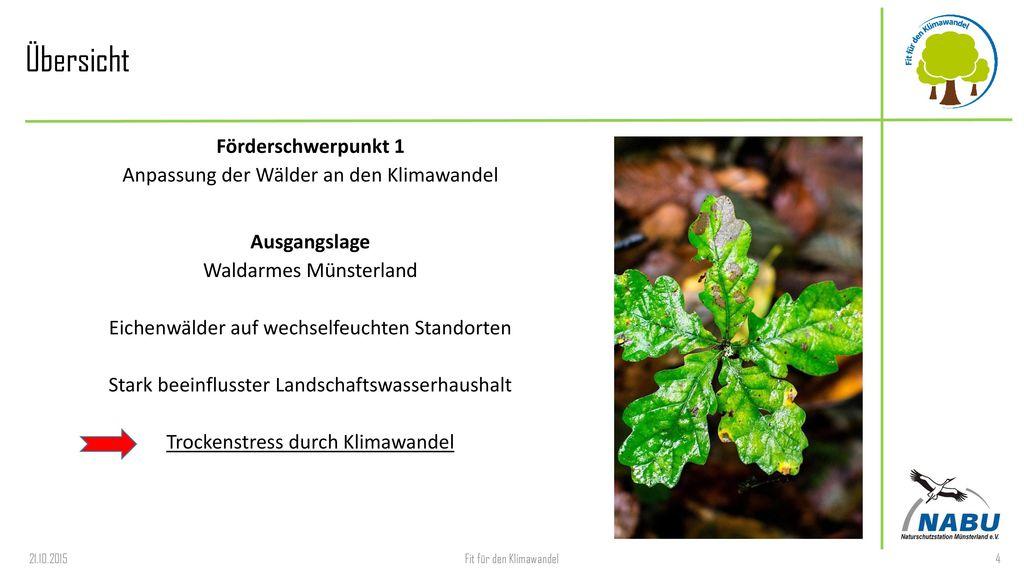 Übersicht Förderschwerpunkt 1 Anpassung der Wälder an den Klimawandel