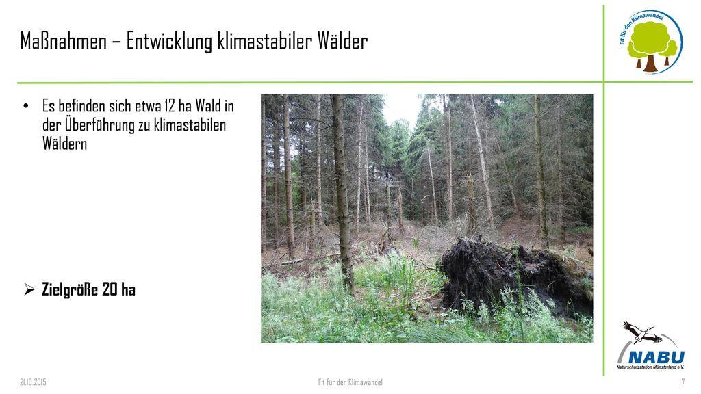 Maßnahmen – Entwicklung klimastabiler Wälder