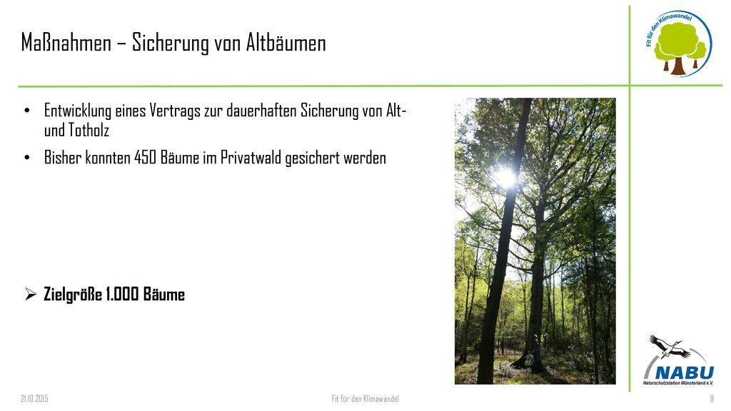 Maßnahmen – Sicherung von Altbäumen