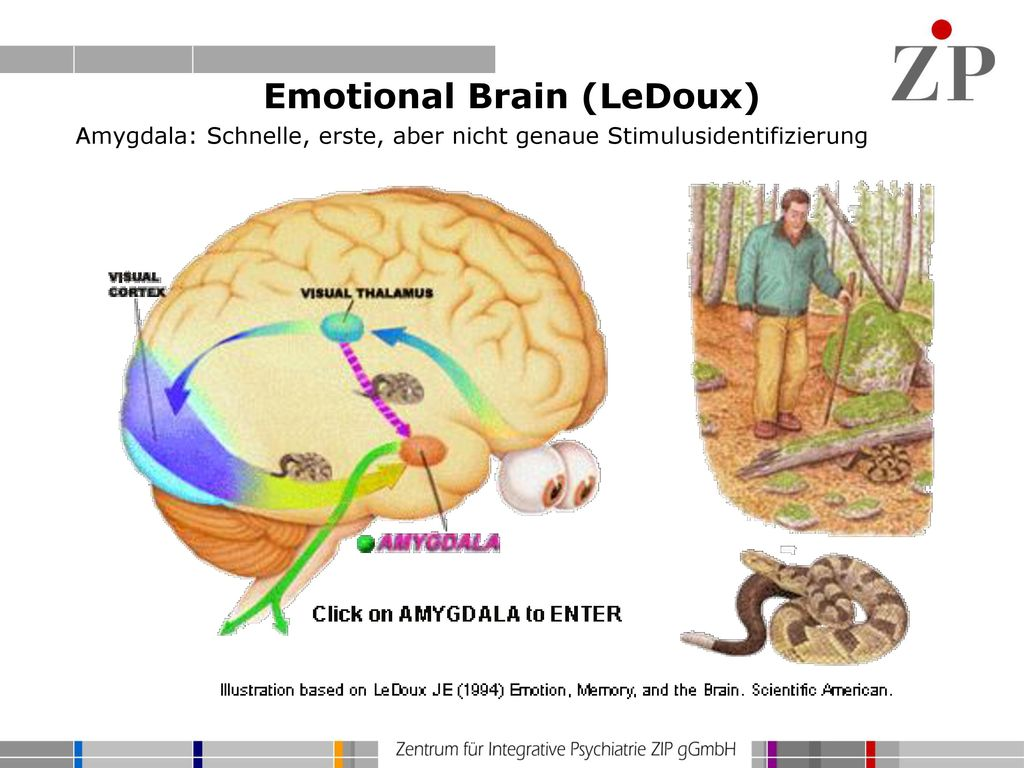 Emotional Brain (LeDoux)