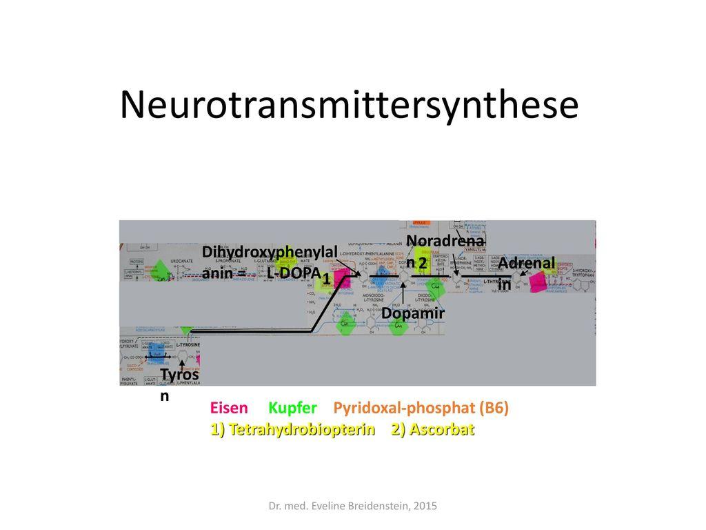 Neurotransmittersynthese