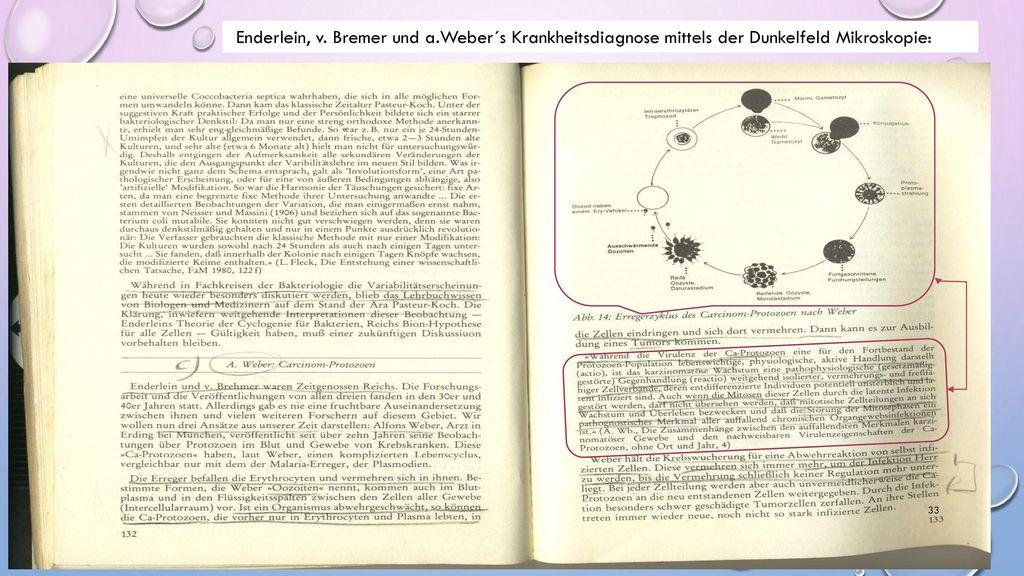 Enderlein, v. Bremer und a