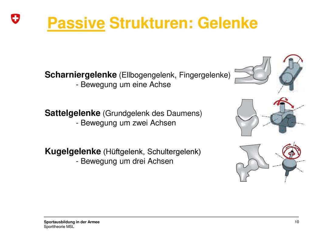 Nett Diagramm Hüftgelenk Zeitgenössisch - Physiologie Von ...