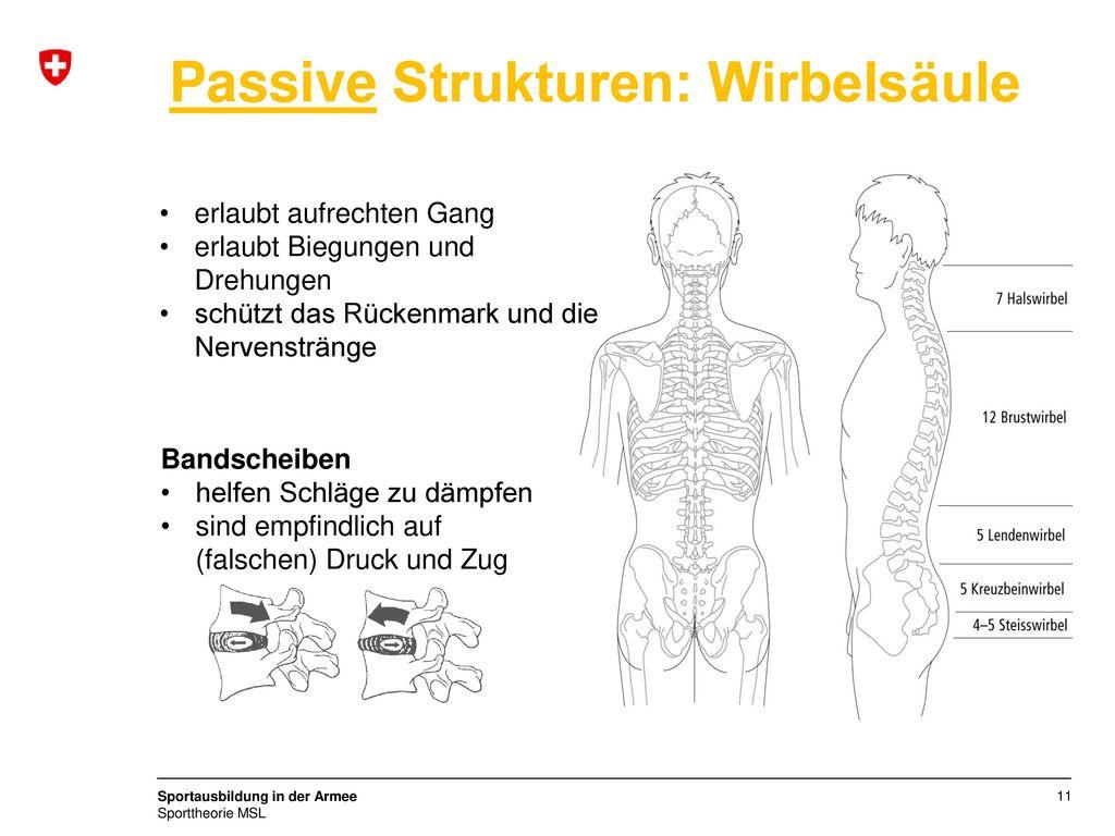 Fein 5. Halswirbel Ideen - Anatomie Und Physiologie Knochen Bilder ...