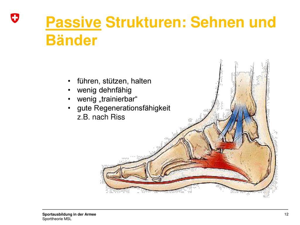 Großartig Anatomie Handgelenk Sehnen Und Bänder Bilder - Menschliche ...
