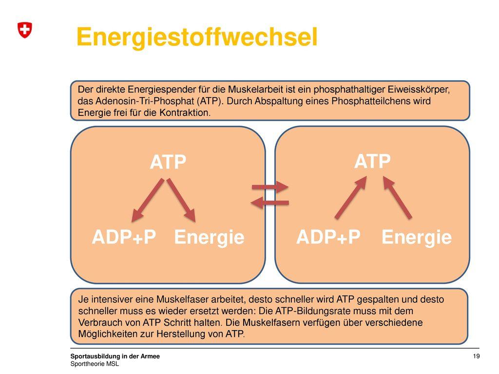 Energiestoffwechsel ATP ATP ADP+P Energie ADP+P Energie