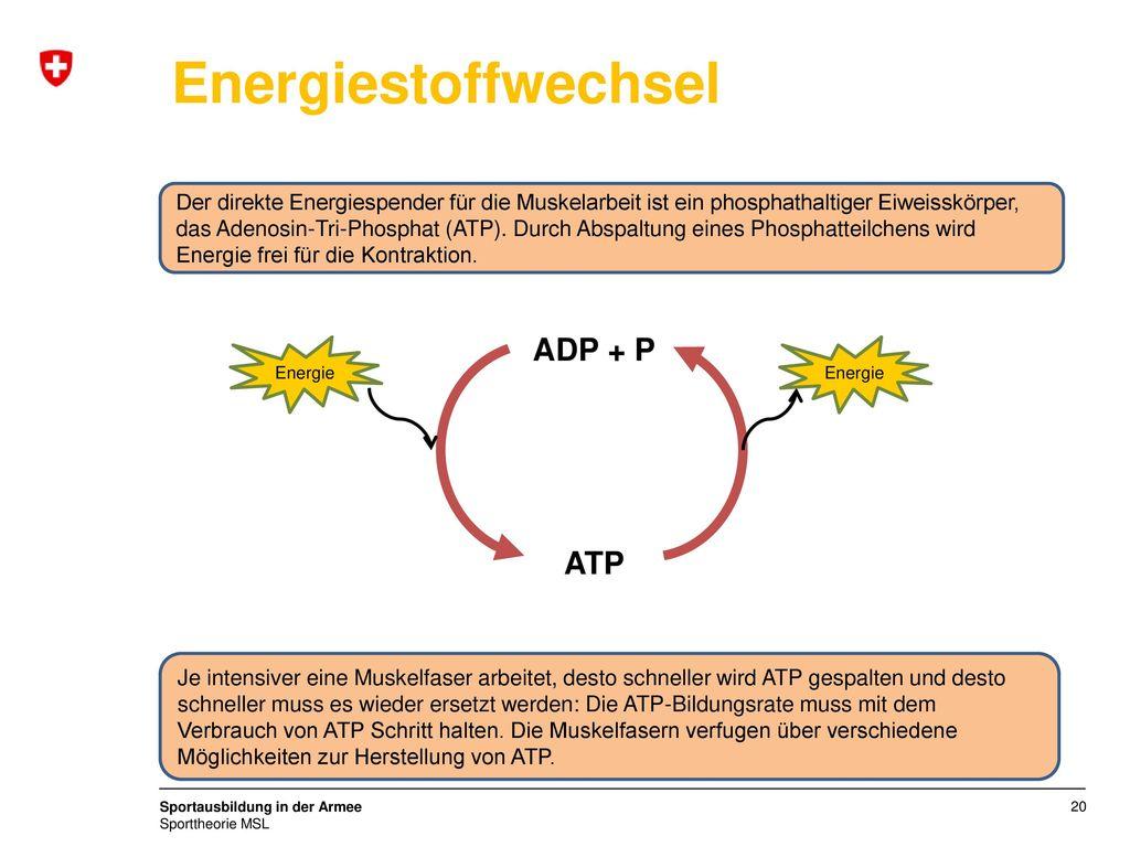 Energiestoffwechsel ADP + P ATP