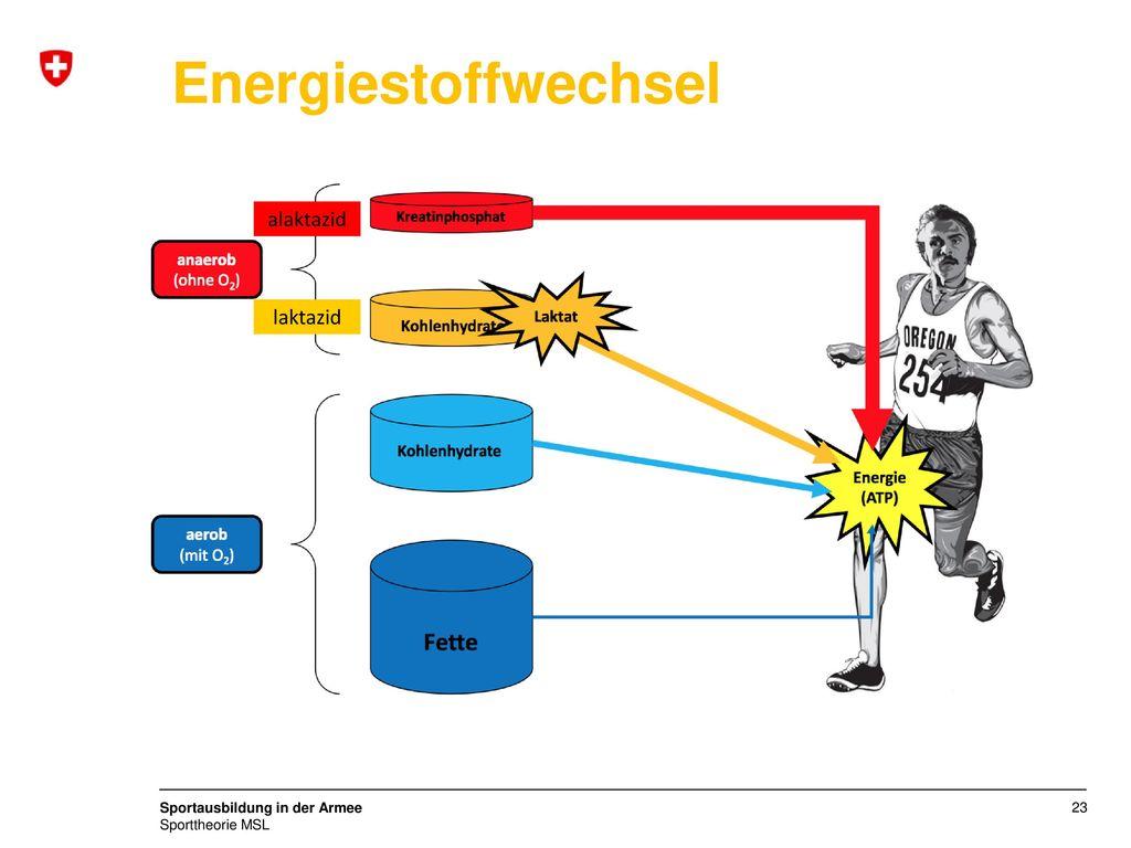 Energiestoffwechsel alaktazid laktazid