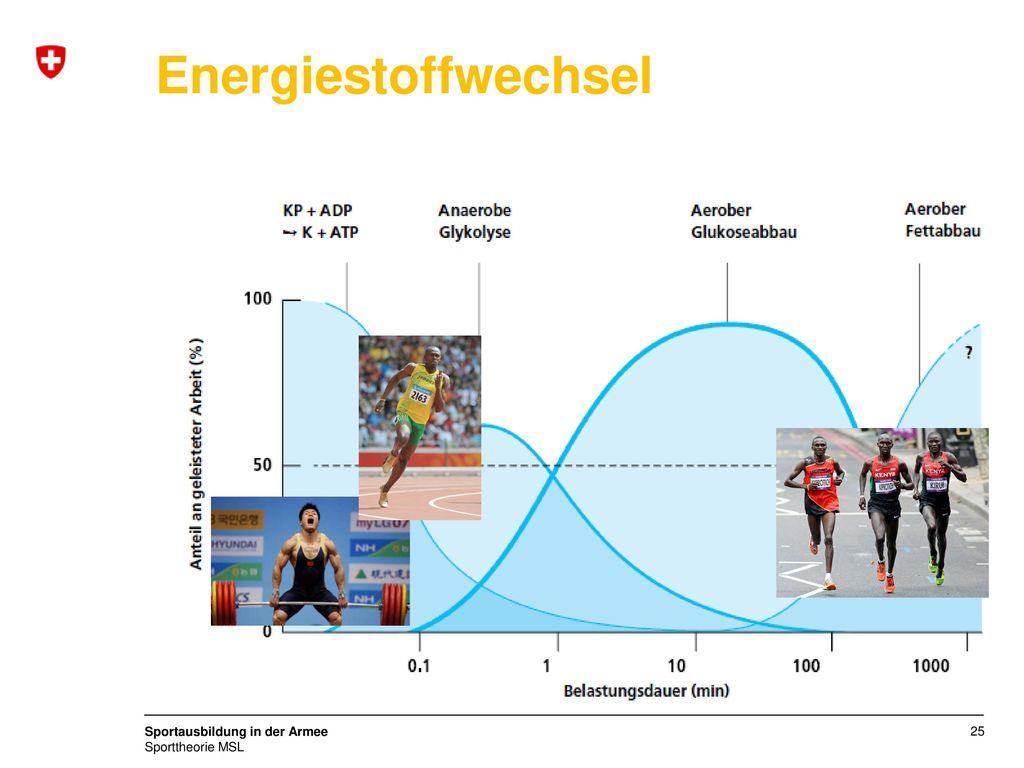Energiestoffwechsel ATP-bildende Systeme in der Muskelfaser bei andauernder Belastung in Abhängigkeit von der Intensität und der Dauer der Belastung.