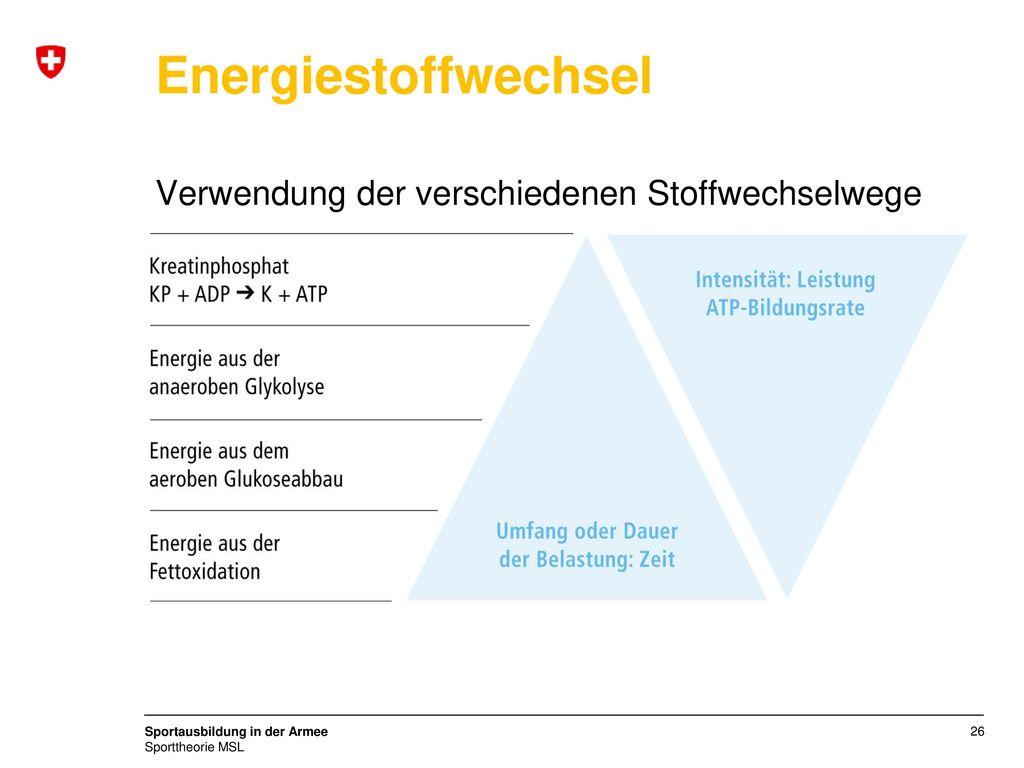 Energiestoffwechsel Verwendung der verschiedenen Stoffwechselwege