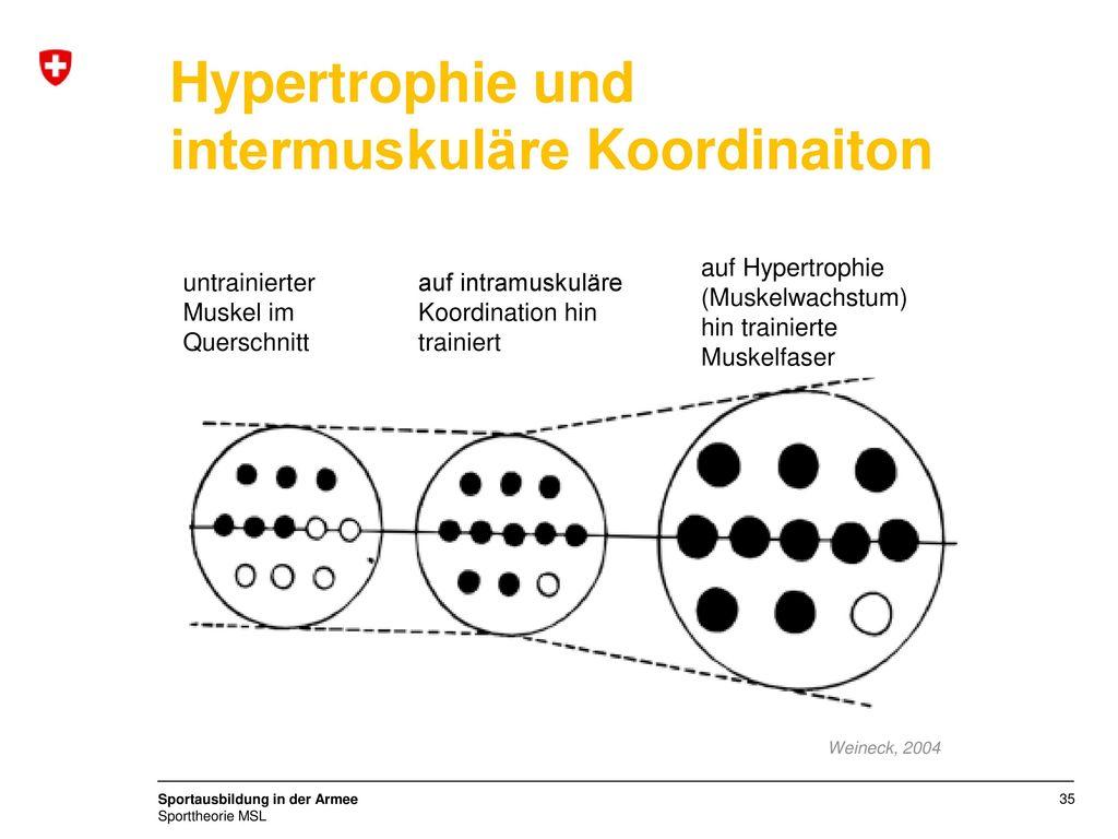 Hypertrophie und intermuskuläre Koordinaiton