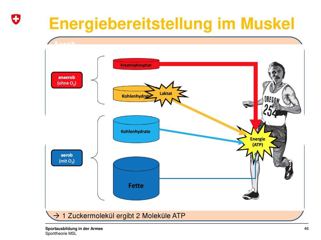 Energiebereitstellung im Muskel