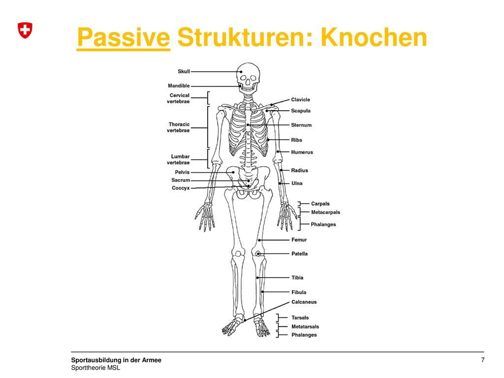Passive Strukturen: Knochen