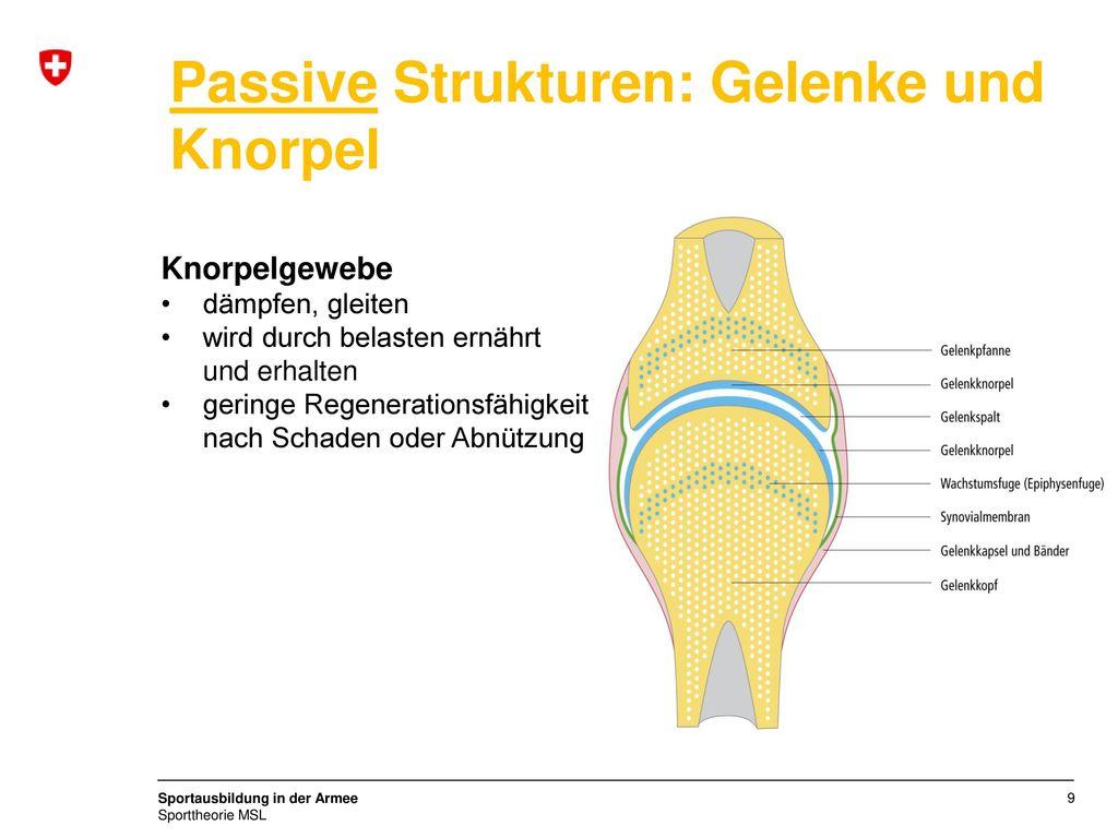 Tolle Si Gelenkanatomie Zeitgenössisch - Anatomie Von Menschlichen ...
