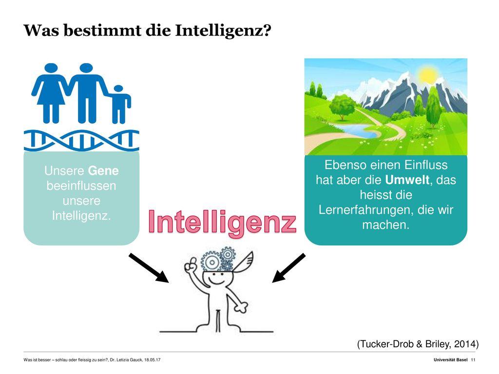 Was bestimmt die Intelligenz