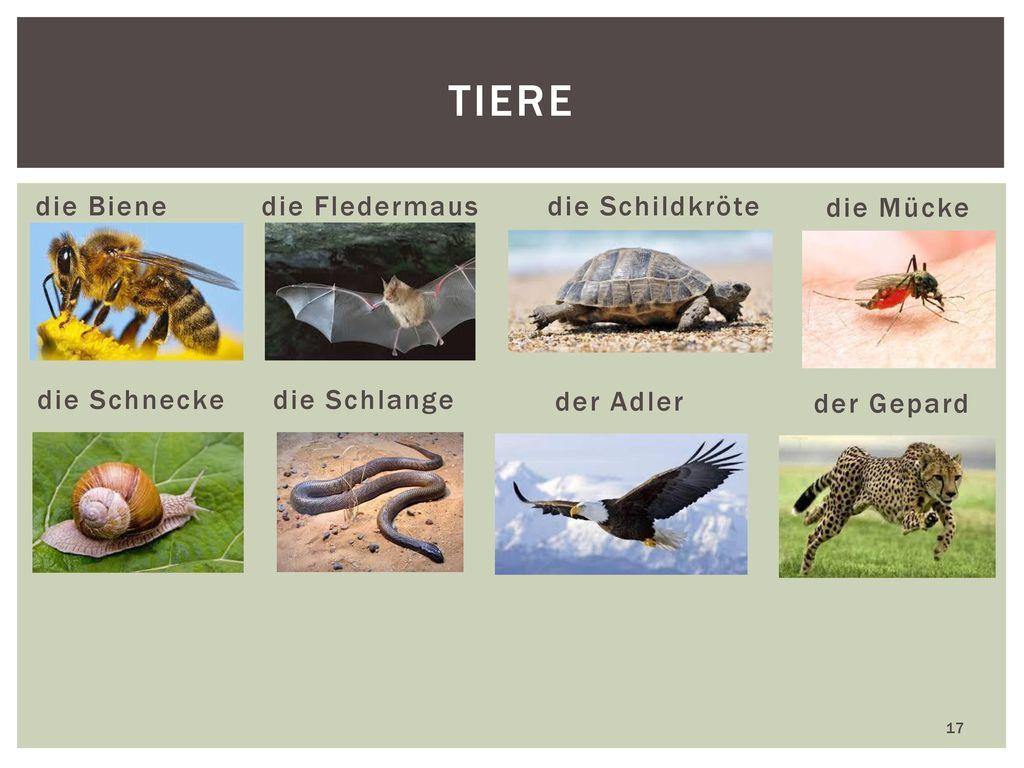 Tiere die Biene die Fledermaus die Schildkröte die Mücke die Schnecke