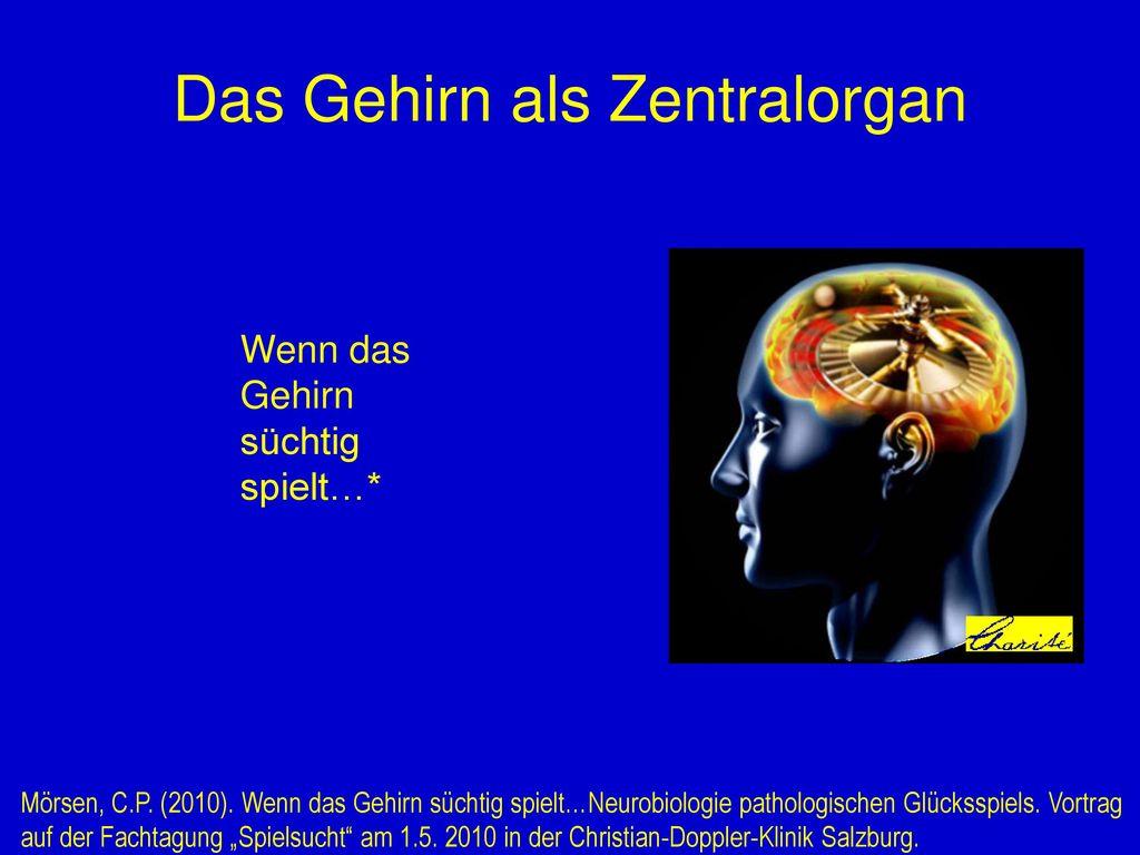 Das Gehirn als Zentralorgan