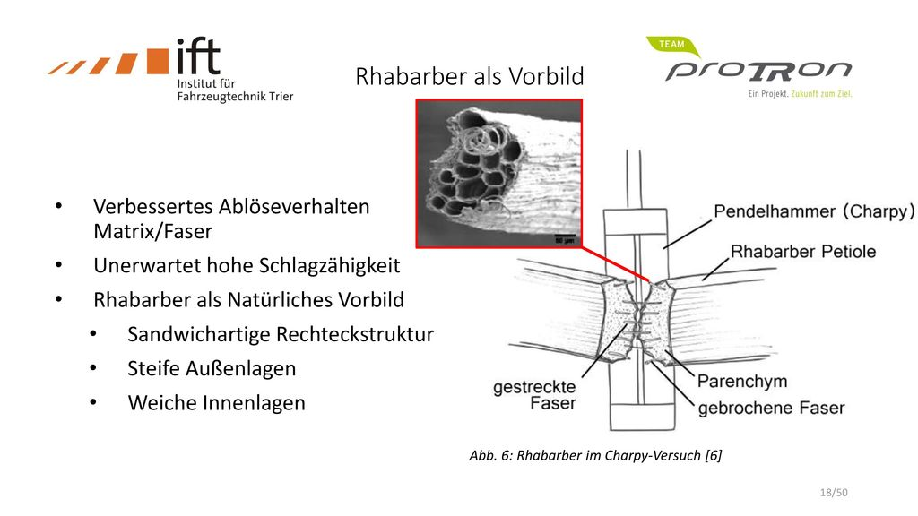 Rhabarber als Vorbild Verbessertes Ablöseverhalten Matrix/Faser