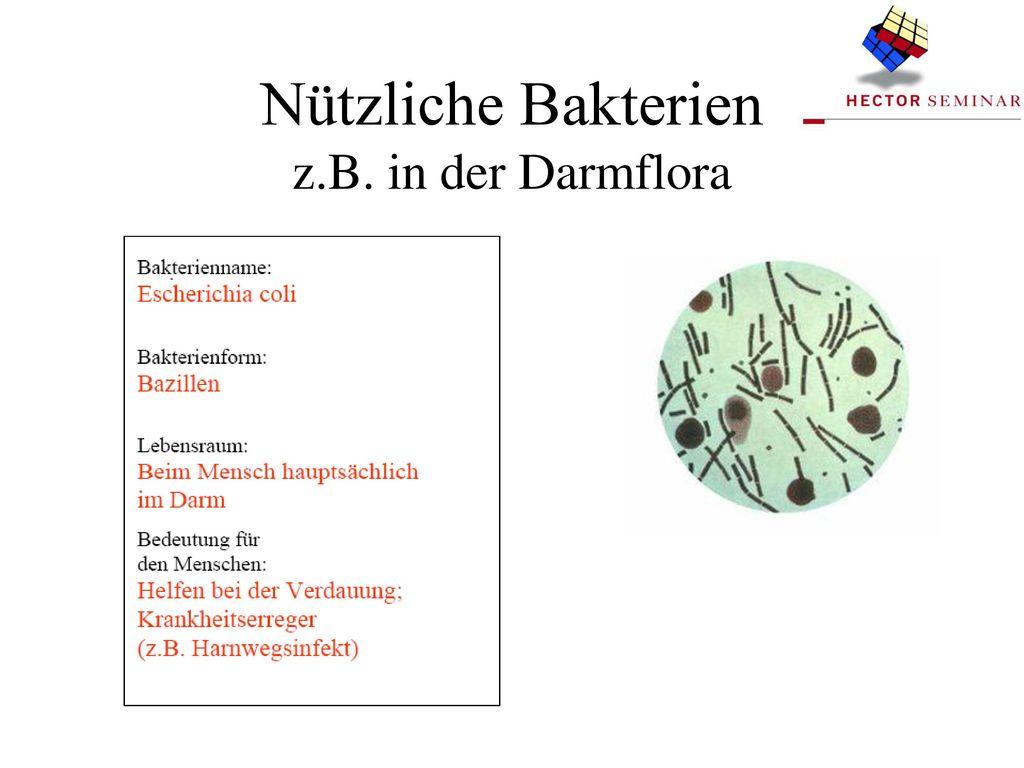 Nützliche Bakterien z.B. in der Darmflora