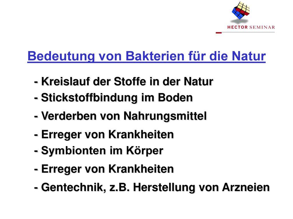 Bedeutung von Bakterien für die Natur