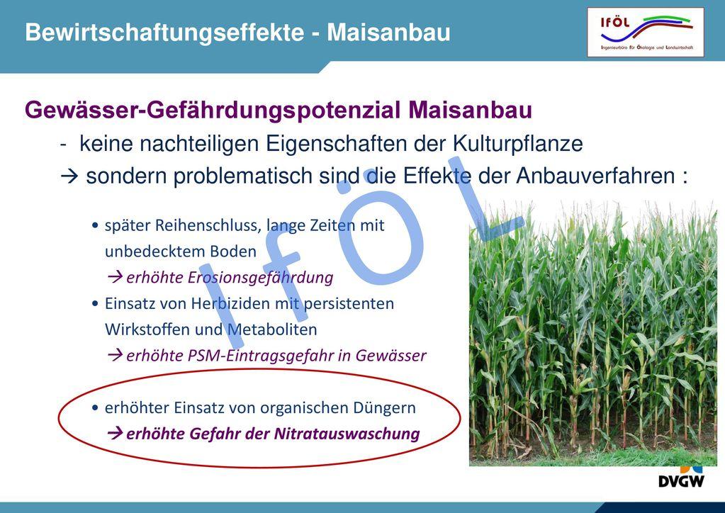 Flächeneffekte - Maisanbau