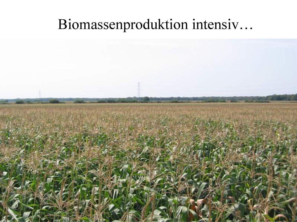 Biomassenproduktion intensiv…