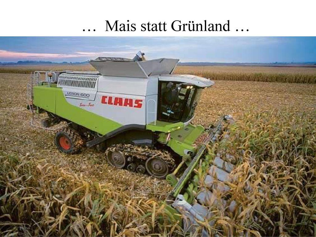 … Mais statt Grünland …