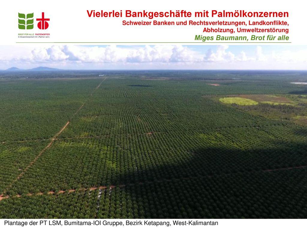 Vielerlei Bankgeschäfte mit Palmölkonzernen Schweizer Banken und Rechtsverletzungen, Landkonflikte, Abholzung, Umweltzerstörung Miges Baumann, Brot für alle