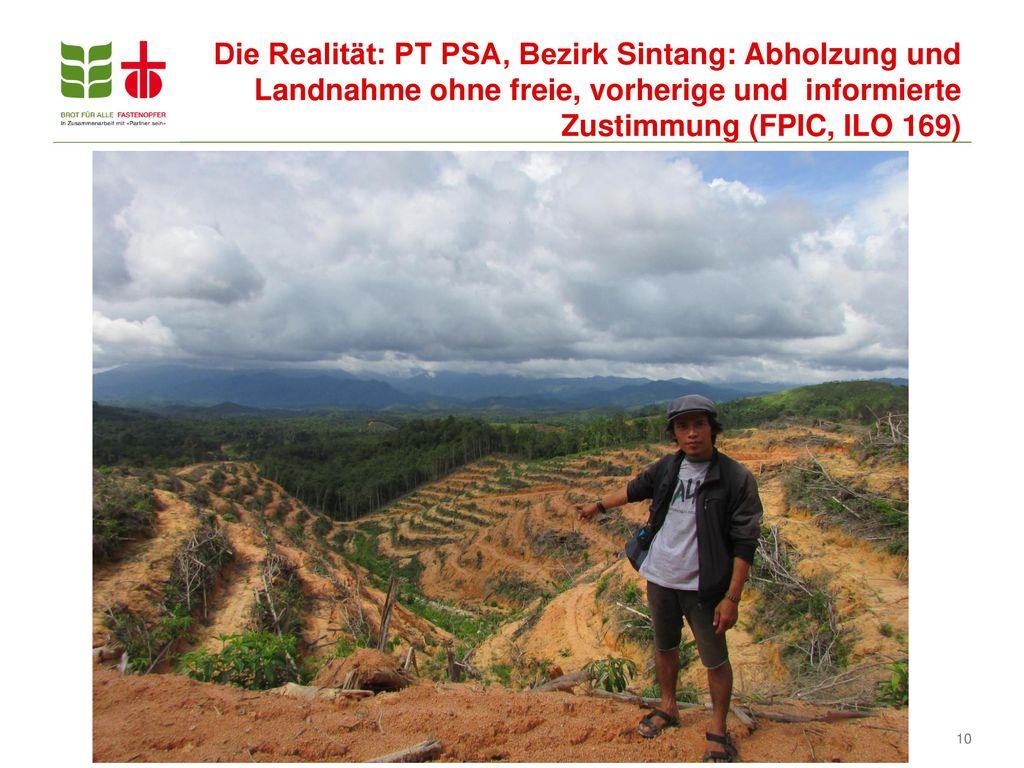 Die Realität: PT PSA, Bezirk Sintang: Abholzung und Landnahme ohne freie, vorherige und informierte Zustimmung (FPIC, ILO 169)