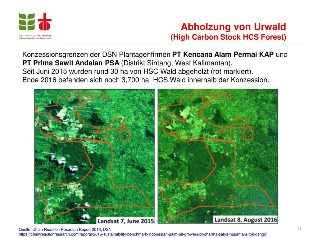 Abholzung von Urwald (High Carbon Stock HCS Forest)
