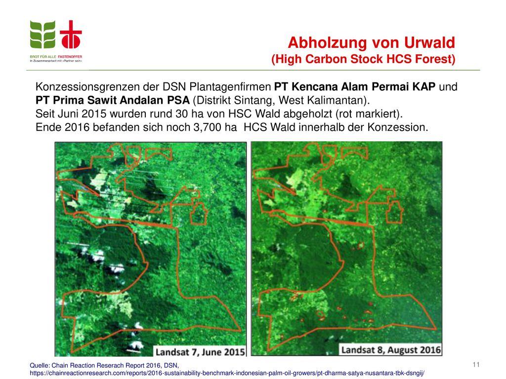 Abholzung von Urwald (High Carbon Stock HCS Forest)