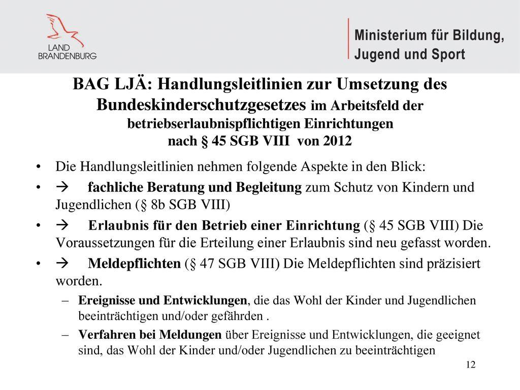 BAG LJÄ: Handlungsleitlinien zur Umsetzung des Bundeskinderschutzgesetzes im Arbeitsfeld der betriebserlaubnispflichtigen Einrichtungen nach § 45 SGB VIII von 2012