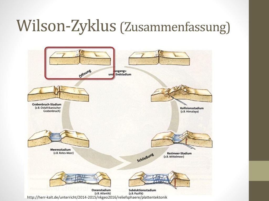 Wilson-Zyklus (Zusammenfassung)